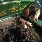 Cat's In The Cradle – Or Engine Bay